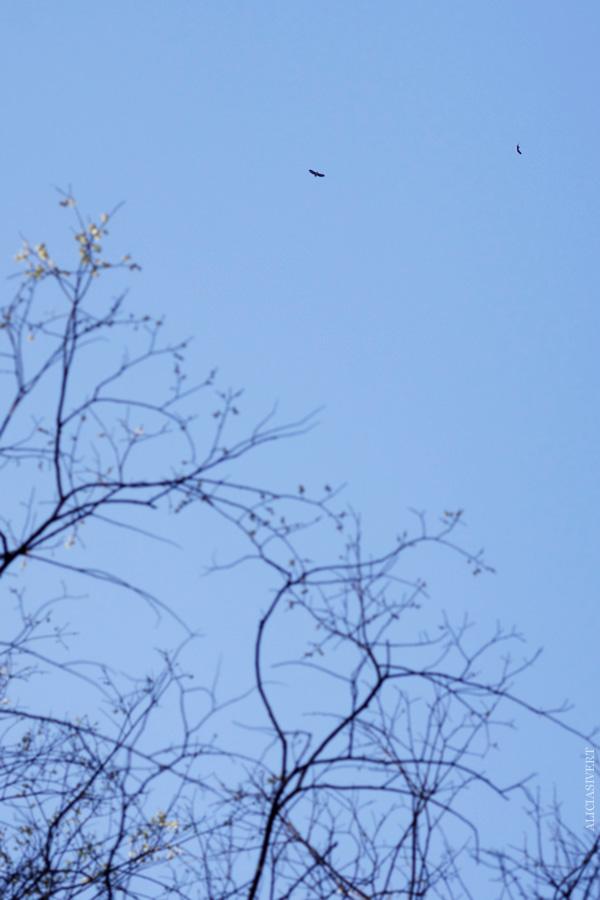 aliciasivert, alicia sivert, alicia sivertsson, fågelskådning, fågelskåda, fågel, fåglar, kikare, utflykt