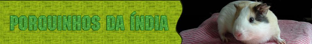 Porquinhos-da-Índia