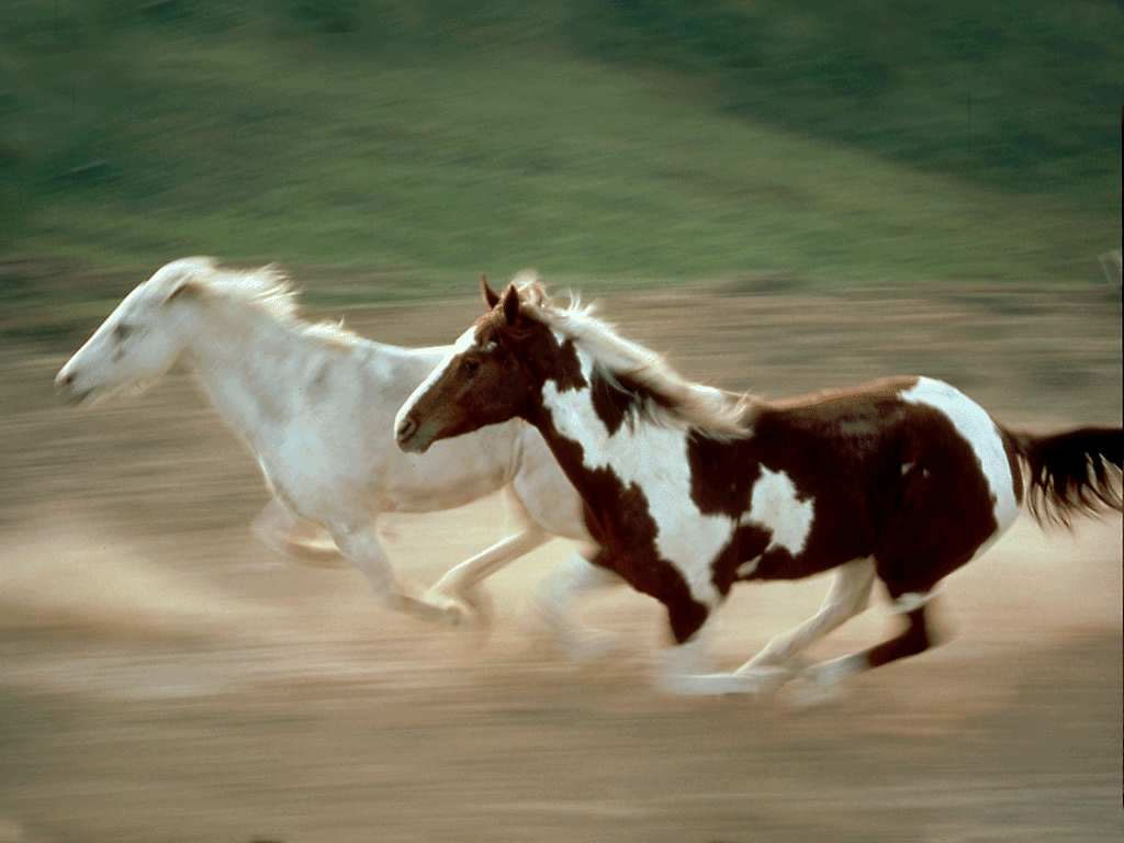 wild horses racing wallpaper - photo #28