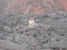 Dog on lava - followed us from the bottom to the top