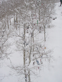 Panty Tree from Vail Colorado - taken by Outdoorzy.com Blog