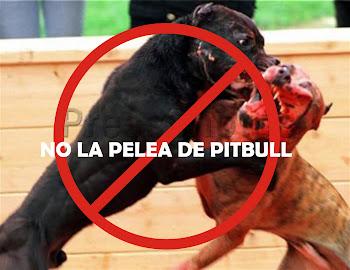 NO A LA PELEA DE PITBULL