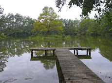 Island on a Lake