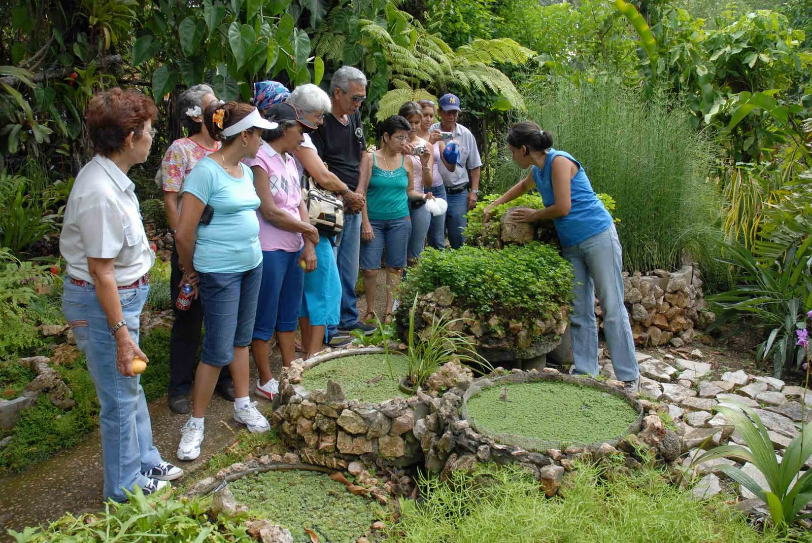 Ideas e imagenes jardin de los helechos tesoro ecologico for Estanque ecologico