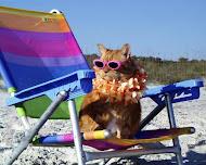 Beach Kitty