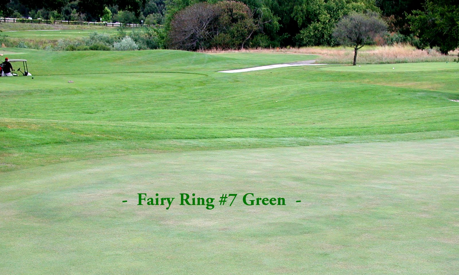 ring spinners and rings saints fairy