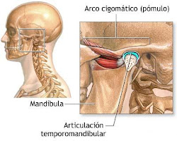 la articulación temporo-mandibular