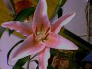 Una flor,  ¿vale más que mil palabras?