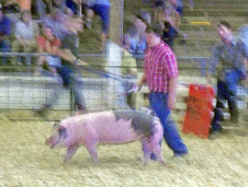 County Fair Week in Indiana (250)