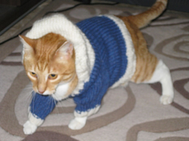 Cats Wearing Some Outfits | Naughty Cuddly Cats | Funny Cats Images Seen On www.coolpicturegallery.us