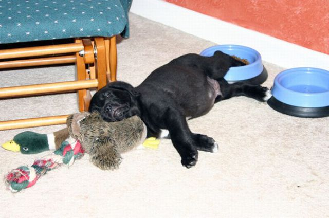 Funny Pets Doggies Sleeping | Really Amazing Funniest Dogs Sleeping Images Seen On www.coolpicturegallery.us