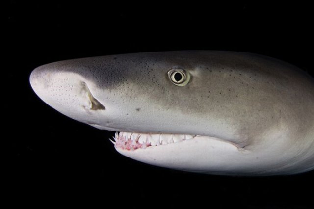 Amazing Sharks | Underwater Sharks Close-Up Stunning Seen On www.coolpicturegallery.us