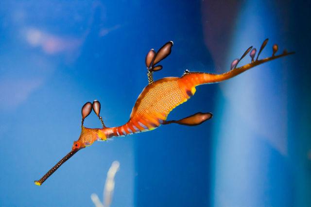 Beautiful Sea Creatures   Amazing Underwater Sea Creatures Seen On www.coolpicturegallery.us