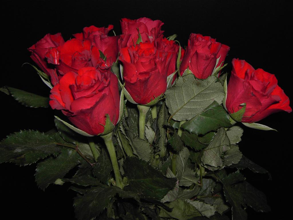 Rose Love Wallpaper Good Night