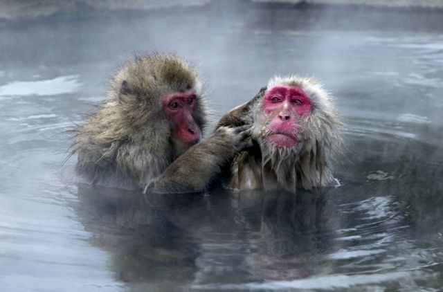 Most Funny Bathing Monkeys Pictures Seen On www.coolpicturegallery.us