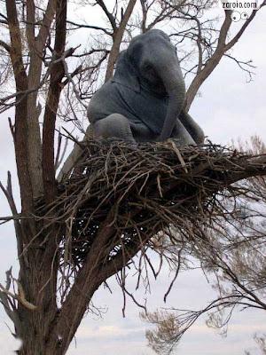 Elefante na árvore