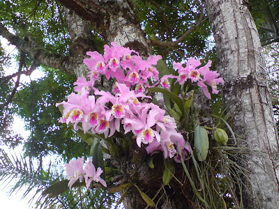 flora tipica estado lara: