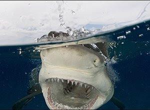 Fotos e tubarões