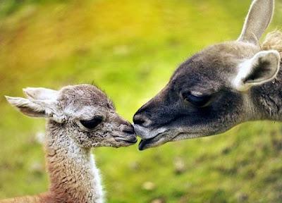 23 - Cutest Animals Pictures
