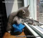 i kill you!!!