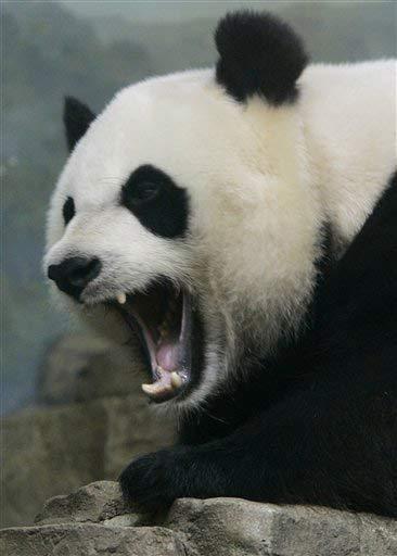 Name Killer Panda