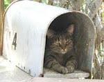 Post an den KatzenSchatz