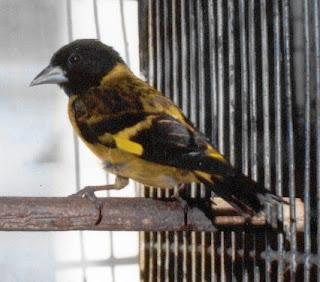 POPETPOP Ba/ño de Aves enjaulado Que cuelga ba/ñera Caja de ba/ño Caja de taz/ón Jaula ba/ño de Aves Cubierto para p/ájaros peque/ños Loro Canario Verde