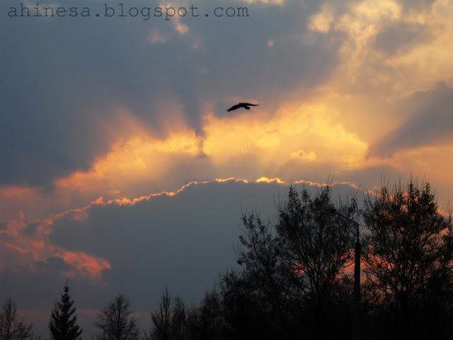 небо, закат, облака, птица в полете