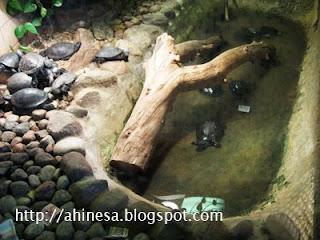 черепахи, Гродно, зоопарк, террариум