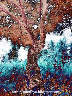 необычные деревья, природа, деревья