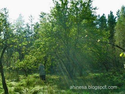 лес, деревья, природа