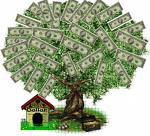 If You Have Always Wanted A Money Tree