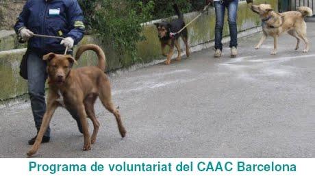 Programa de voluntariat del CAAC Barcelona