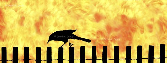Fence Walker