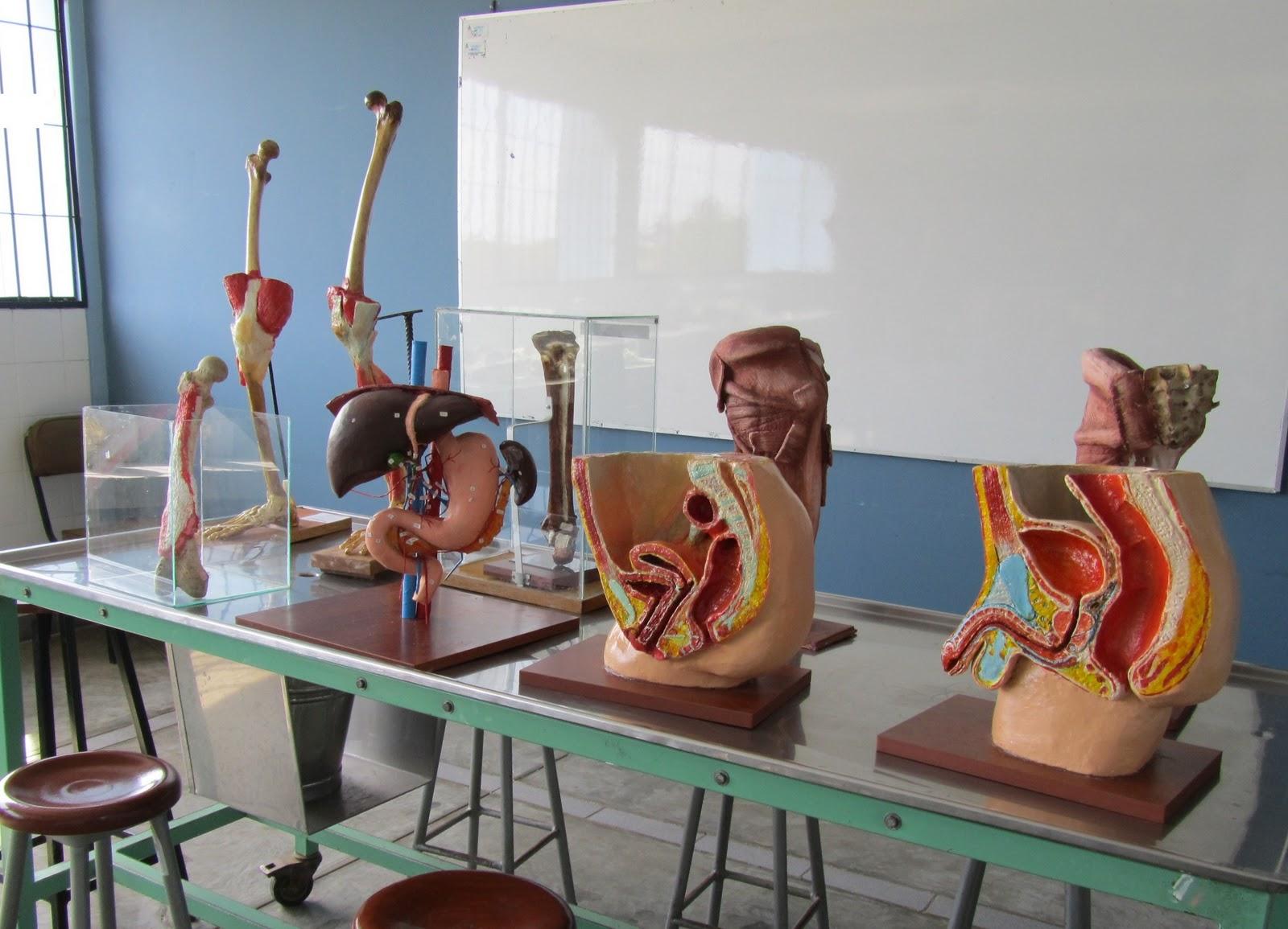 imagenes de practicas de laboratorio: