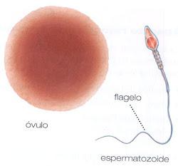 Las células reproductoras