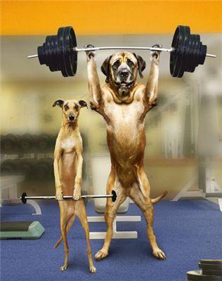funny pictures of dogs. funny pictures of dogs. funny