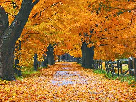 [otoño]