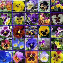Eu amo flores!