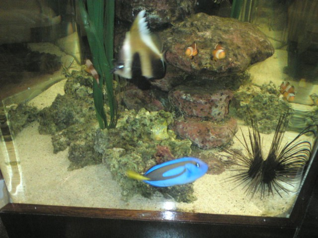 Finding nemo fish tank replica images for Finding nemo fish tank