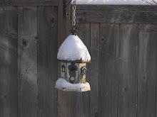 Snow Dec 2008