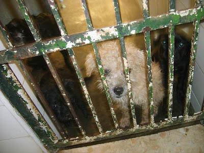 SOS, Perrera de Mairena,, es horrible la cantidad de animales que nos suplican ayuda con sus ojitos S5006905