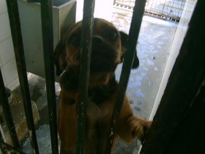 SOS, Perrera de Mairena,, es horrible la cantidad de animales que nos suplican ayuda con sus ojitos S5006910