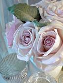 adoro le rose