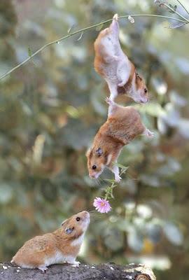 Trio de Ratinhos entregando Flor
