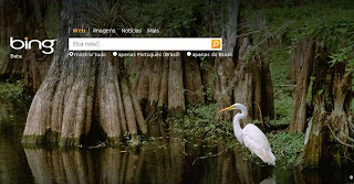 Bing encontra vídeos pornográficos