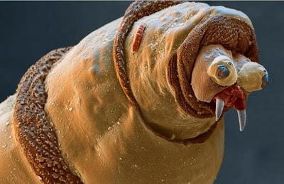 insetos horríveis
