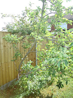 My Apple Tree