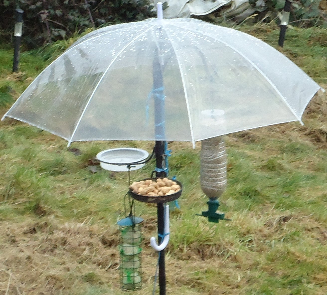 http://3.bp.blogspot.com/_-VCvZFCV5hI/TSB_m6lVt-I/AAAAAAAAD7w/_mM1H5vQ82w/s1600/Bird%20Feeder%20with%20Umbrella.jpg