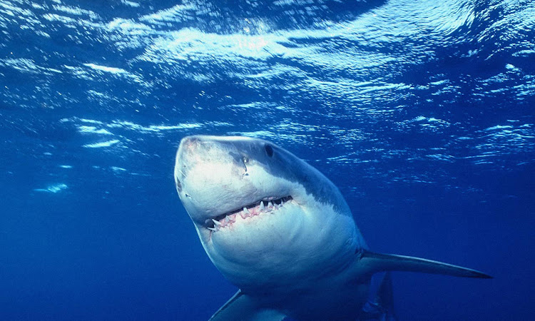 Give Me a Hug Shark!